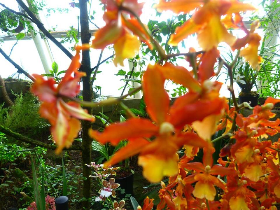 Bot Garden 03